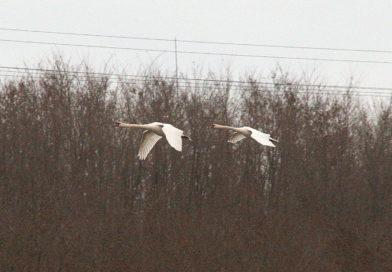Zimowy birdwatching w Przełajce