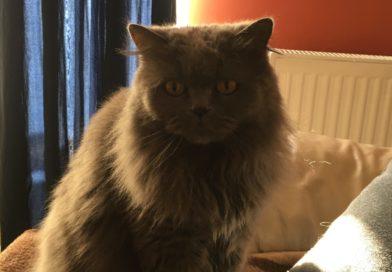 Okiem przyrodnika – kot