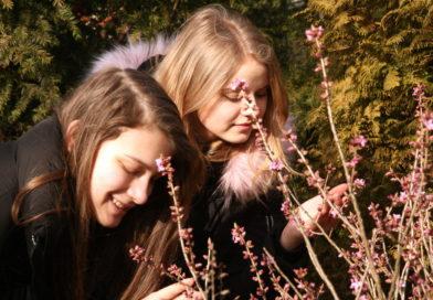 Zimą w Parku Śląskim pachną wawrzynki